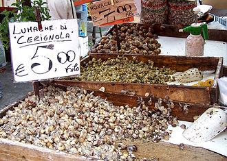 Helicidae - Helicid snails for sale as food in Italy; from the front Eobania vermiculata, Cantareus apertus, and Helix sp.