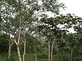 Snap from Bannerghatta National Park Bangalore 8527.JPG