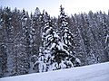 Snow-covered trees dyeclan.com - panoramio.jpg