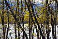 Some trees on the Plastiras Lake.jpg