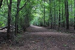 Songbird Trail Neches River NWR.jpg