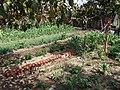 South Central Farm 10.jpg