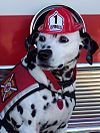 Sparkles the Fire Safety Dog.jpg