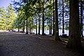 Spider Lake, Nanaimo, Vancouver Island (36450091450).jpg