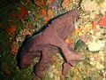 Sponge at Duiker Point Canyon P4137392.JPG