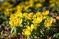 Spring flowers (33504003396).jpg