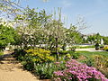 Springtime in Bartholdi Park - Washington, DC - DSC09439.JPG