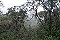 Sri Lanka, Tropical rainforest on the slopes of misty Sri Pada mountain.jpg