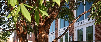Stamp Student Union Acer griseum paperbark maple.JPG