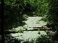 Starorzecze Odry (Odra cut-off) - panoramio.jpg