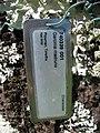 Starr-091104-0807-Garcinia madruno-plant tag-Kahanu Gardens NTBG Kaeleku Hana-Maui (24961322176).jpg