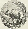 Stier en koeien in een rivier Veestukken naar Johann Heinrich Roos (serietitel), RP-P-2009-512.jpg