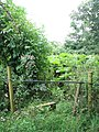 Stile on overgrown path - geograph.org.uk - 1405699.jpg