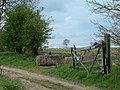 Strawberry fields. - geograph.org.uk - 162161.jpg