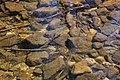 Streambed of Sand Spring Run.jpg