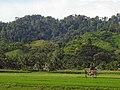 Sulawesi trsr DSCN0968 v1.JPG