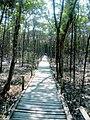 Sundarban, footbridge for tourists.jpg