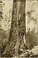 Tasmanian forestry - timber products and sawmilling industry, a description of timber trees indigenous to Tasmania, their commercial value and process of manufacture, with methods adopted by the (14595609878).jpg