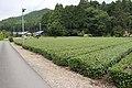 Tea field in Shirosato, Ibaraki 02.jpg