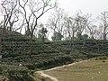 Tea gardens Srimangal Sreemangal Upazila Moulvibazar Maulvibazar Moulavibazar Sylhet 03.jpg