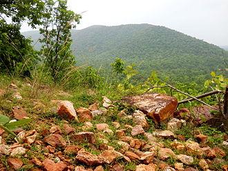 Temri - forest area in temri village
