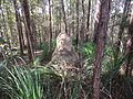 Termite mound in Lake Baroon Conservation Area, Queensland.jpg