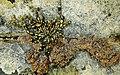 Tessellated Pavement 15.jpg