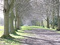 The Avenue, Farnham Park - geograph.org.uk - 746889.jpg