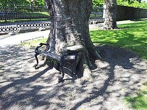The Hungry Tree at Kings Inns (geograph 4572088).jpg