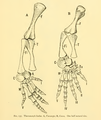 The Osteology of the Reptiles-185 ih uyg.png