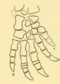 The Osteology of the Reptiles-190 jhgv jh jh uhyg jh.png