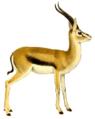 The book of antelopes (1894) Gazella thomsoni white background.png