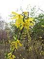 The flowers in the Fuyang park 4.jpg