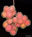 The rambutan (Nephelium lappaceum) (18580339478).jpg