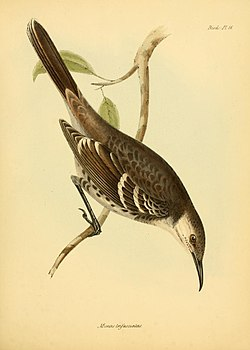 The zoology of the voyage of H.M.S. Beagle (Birds Pl. 16) (8430588988).jpg