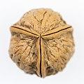 Three-part Walnut-8284.jpg