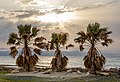 Three palm trees during the sunset, Ayia Marina Chrysochous, Paphos District, Cyprus 02.jpg
