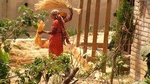 File:Threshing rice by hand 1920x1080.ogv