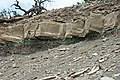 Tidwell Member of the Morrison Formation over Wanakah Formation (Jurassic; roadcut near Artists Point, Colorado National Monument, Colorado, USA) 5 (23716255900).jpg