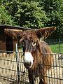 Tiergarten Kleve PM16 004.jpg