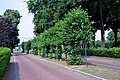 Tilia × europaea, Garderen, Mazenhofstraat (02).jpg