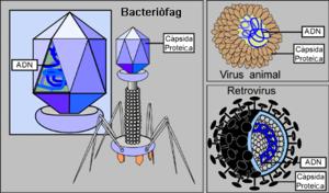 Tipus de virus