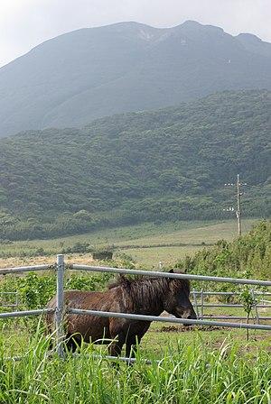 Tokara Islands - Tokara Pony