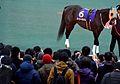 Tokyo Daishoten 20141229 Hokko Tarumae.JPG