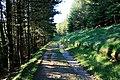 Track Through the Plantation - geograph.org.uk - 1502366.jpg