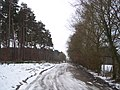 Track into Hemsted Forest - geograph.org.uk - 1713957.jpg