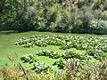 Trail of the Coeur d' Alenes (10490140655).jpg