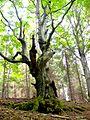 Tree - panoramio - Dusan Bajus.jpg