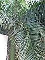 Tree YAA kind.JPG