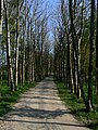 Tree lined path - geograph.org.uk - 422983.jpg